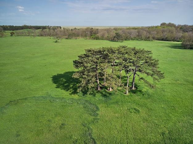 Nadelbäume auf einer grünen wiese im park, am horizontwald und am blauen himmel