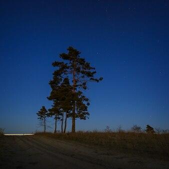 Nadelbaum auf einer oberfläche des nachtsternhimmels.