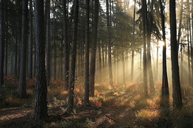 Nadelwald im herbst bei nebligem wetter während des sonnenaufgangs
