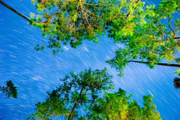 Nächtlicher himmel mit sternspuren über dem kiefernwald am pha-sohn wat chan, chiang mai, thailand