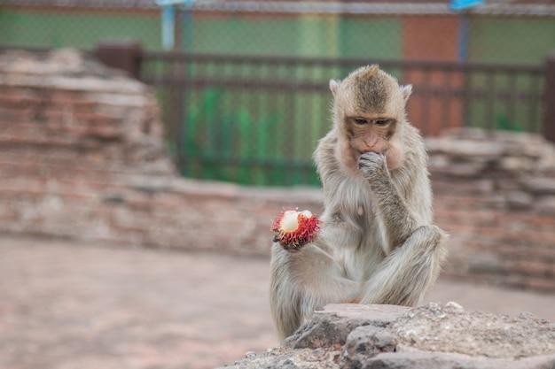 Nahaufnahme-affe, der frucht isst