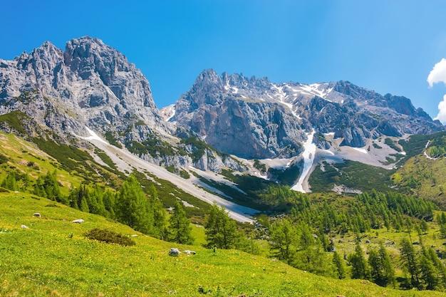 Nahaufnahme alpenfelsen im nationalpark dachstein, österreich, europa anzeigen. blauer himmel und grüner wald am sommertag