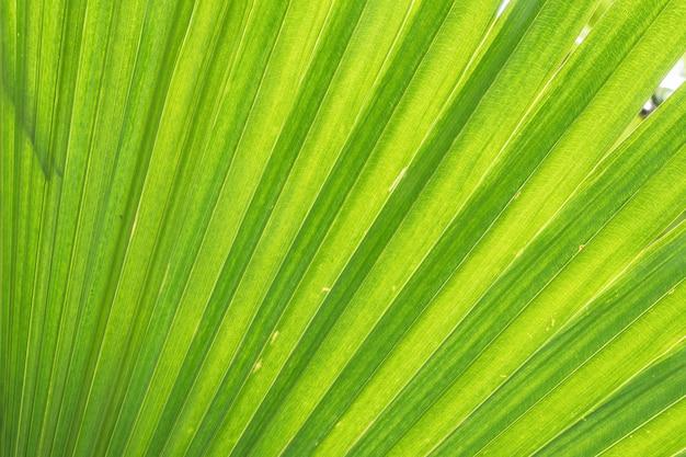Nahaufnahme am grünen blatt des grünen palmehintergrundes