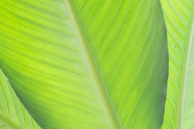 Nahaufnahme am grünen blatthintergrund