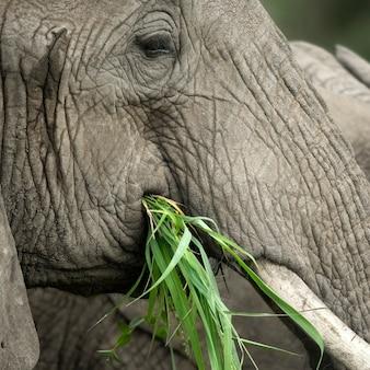 Nahaufnahme auf dem kopf eines elefanten