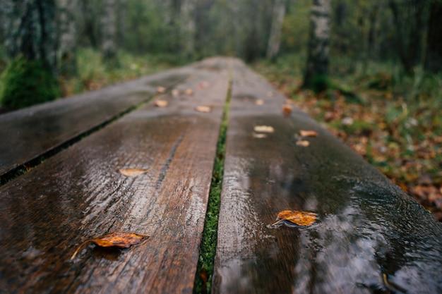 Nahaufnahme auf dem plankenwanderweg nass nach regen