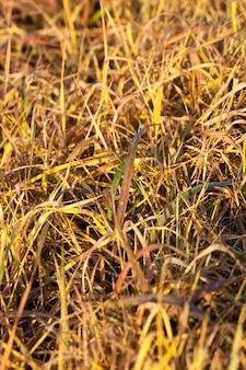 Nahaufnahme auf gras nahaufnahme