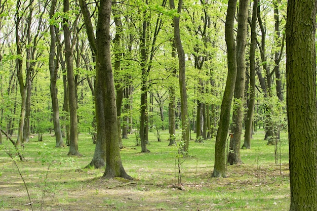 Nahaufnahme auf green tree trunks im spring park