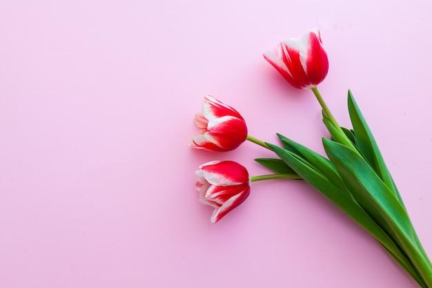 Nahaufnahme auf roten tulpen als frühlings- und frauentagskonzept