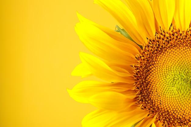 Nahaufnahme auf schöne sonnenblume
