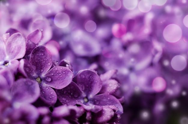 Nahaufnahme bild von leuchtend violetten lila blumen abstrakten romantischen blumenhintergrund