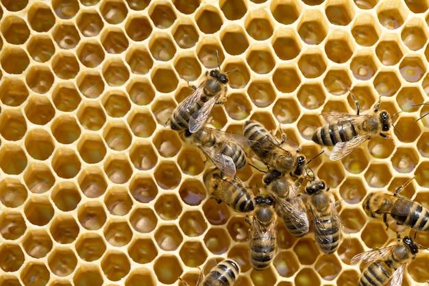 Nahaufnahme der arbeitenden bienen auf honigzellen.