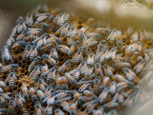 Nahaufnahme der arbeitsbiene auf waben