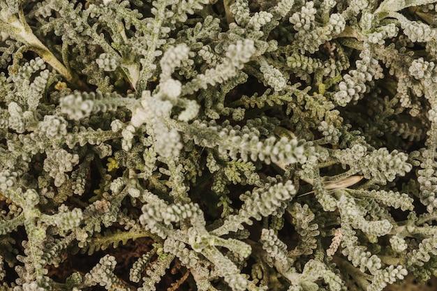 Nahaufnahme der atemberaubenden pflanzenblätter