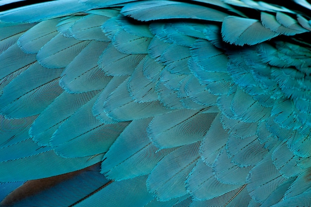 Nahaufnahme der blau-gelben ara-federn, ara ararauna