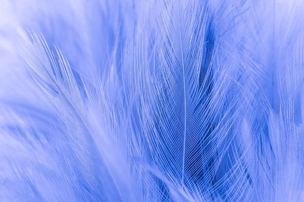 Nahaufnahme der blauen federn
