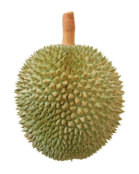 Nahaufnahme der durianfrucht lokalisiert auf weiß
