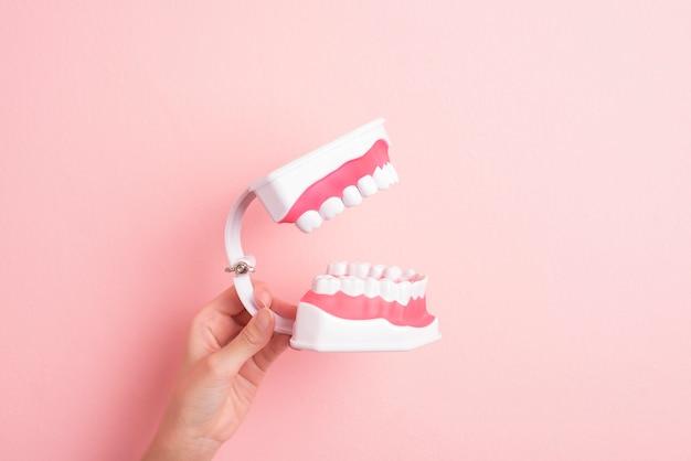 Nahaufnahme der frauenhand hält künstliche modellzähne zur demonstration zahnreinigung
