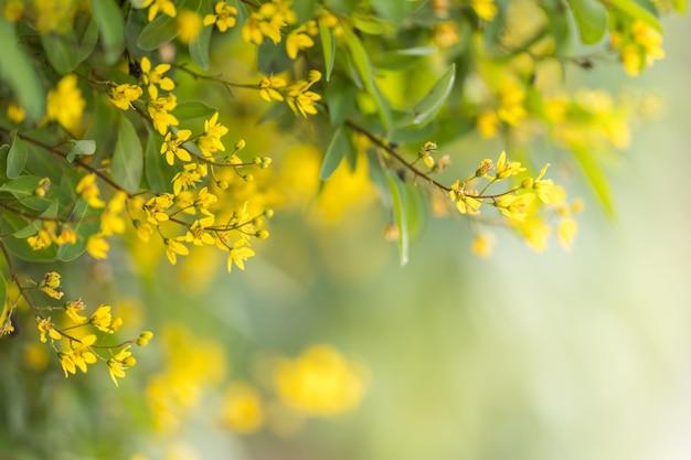 Nahaufnahme der gelben blume auf unscharfem grün