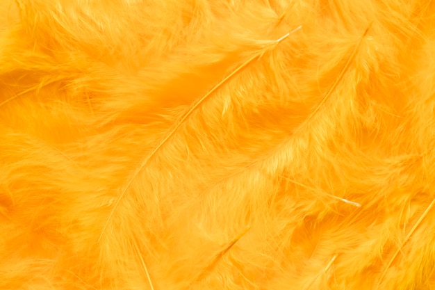 Nahaufnahme der gelben federn