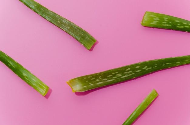 Nahaufnahme der grünen aloe vera verlässt auf rosa hintergrund