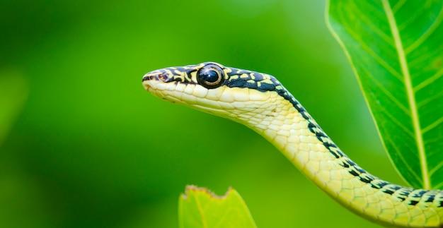 Nahaufnahme der grünen mambaschlange auf baum, tropischer wald, thailand