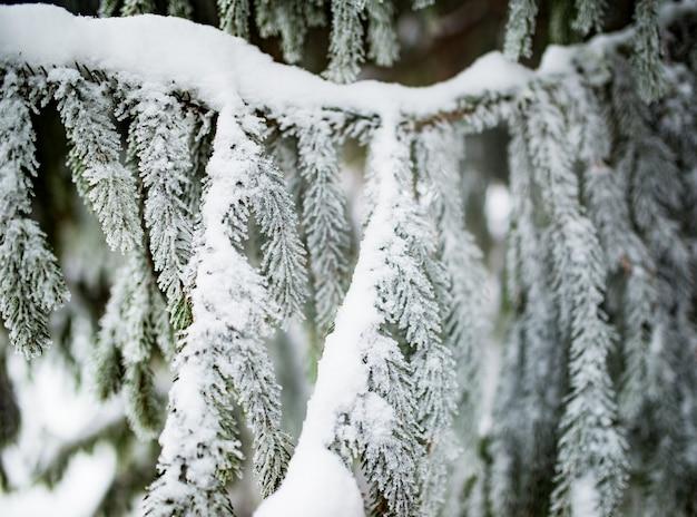 Nahaufnahme der grünen schneebedeckten gefrorenen fichte
