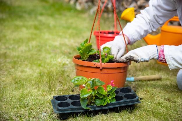 Nahaufnahme der hände eines gärtners, der blumen in einem topf auf grünem gras pflanzt