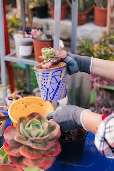 Nahaufnahme der hand der frau den kaktus halten malte topf