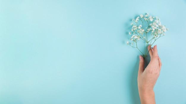 Nahaufnahme der hand der frau weißen gypsophila gegen blauen hintergrund in der hand halten