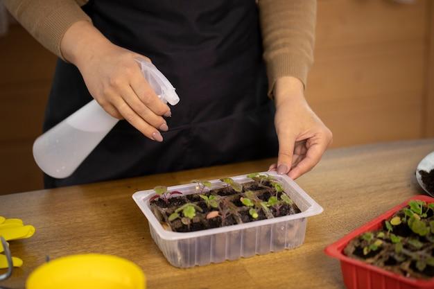 Nahaufnahme der hand der jungen frau, die sprühgerät mit wasser hält, bevor blumensprossen gepflanzt werden