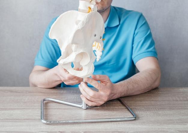 Nahaufnahme der hand des männlichen arztes, die ischialtuberosität zeigt oder knochen auf beckengürtelmodell sitzt