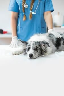 Nahaufnahme der hand des tierarztes auf dem kranken hund, der auf tabelle in der klinik liegt