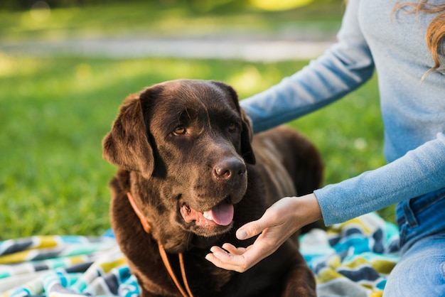 Nahaufnahme der hand einer frau, die ihren hund streicht