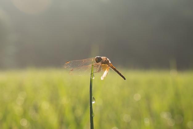 Nahaufnahme der kleinen schönen libelle, sie sind der beste mückenvernichter in der natur