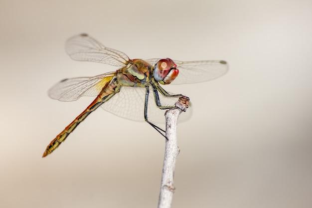 Nahaufnahme der libelle auf pflanze