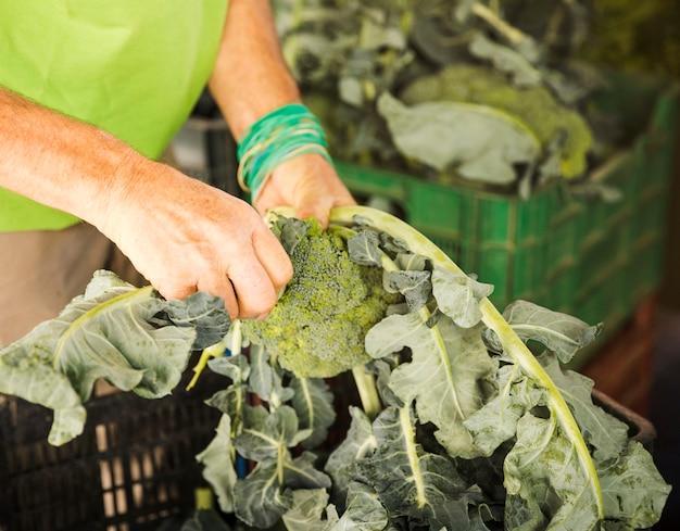 Nahaufnahme der männlichen hand brokkoli in kiste beim einkauf am markt einsetzend