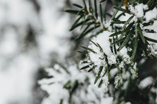 Nahaufnahme der mit schnee bedeckten fichte