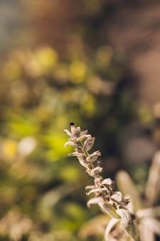 Nahaufnahme der pflanze
