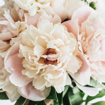 Nahaufnahme der rosa pfingstrosenblumen auf weißer oberfläche