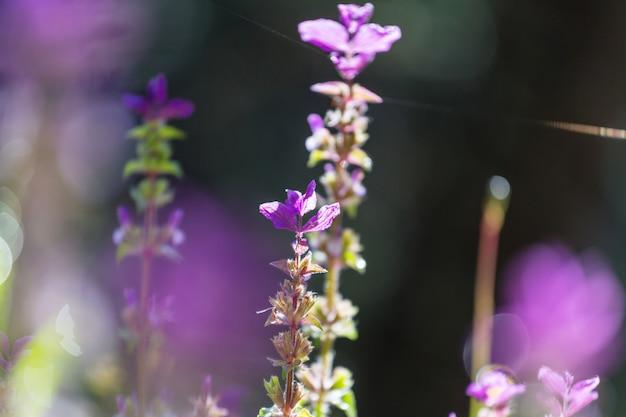Nahaufnahme der schönen blumen. geeignet für floralen hintergrund.