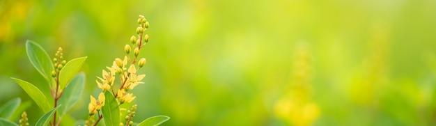 Nahaufnahme der schönen gelben mini-blume unter sonnenlicht mit kopienraum, der als natürliche naturlandschaft des hintergrunds verwendet