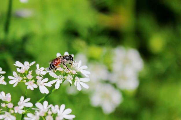 Nahaufnahme der schönen hornisse und der biene im garten