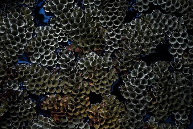 Nahaufnahme der schönen korallen unter dem meer