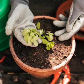 Nahaufnahme der tragenden handschuhe eines gärtners hand, die um dem sämling gepflanzt im topf sich kümmern