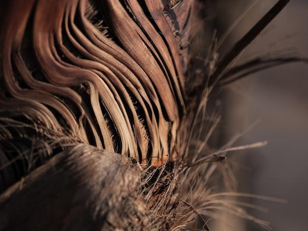 Nahaufnahme der trockenen vliesrinde auf dem stamm der palme im sonnenlicht.