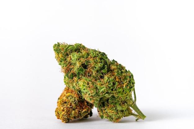 Nahaufnahme der verschreibungspflichtigen medizinischen marihuana-blütenknospe in weißem hintergrund