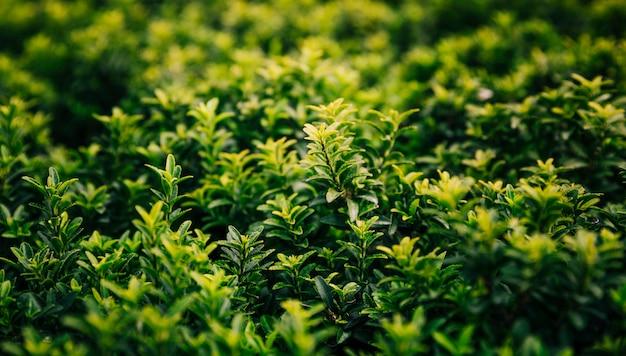 Nahaufnahme der wachsenden frischen grünpflanzen