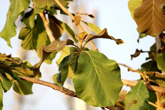 Nahaufnahme der wilden baumblätter