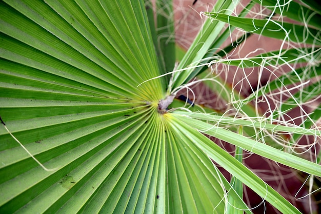 Nahaufnahme der wilden pflanzenblätter